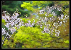 nEO_IMG_DP1U3778 (c0466art) Tags: park old trip travel flowers light green castle pool beautiful japan canon season spring scenery afternoon bloom sakura 2015 trres 1dx c0466art