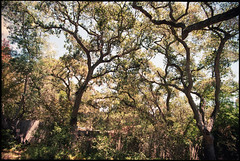 Santa Cruz (westkauai) Tags: california santacruz c41 nikonfm gc400 colornegativefilm vivitarseries1 aboutcolor photoworkssf viewedfromthestreet 1935mmlens