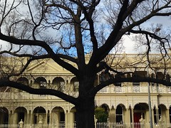 East Melbourne, Winter (Mark Tindale) Tags: 1800s eastmelbourne elm english englishelmtree facade fence historic iron lacework melbourne powlett shadow terracehouses tree trees victoria victorian public