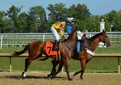 2015-07-31 (37) r5 Julian Pimentel on #7 Cashondabarrelhead (JLeeFleenor) Tags: photos photography md marylandracing marylandhorseracing laurelpark jockey   jinete  dokej jocheu  jquei okej kilparatsastaja rennreiter fantino    jokey ngi horses thoroughbreds equine equestrian cheval cavalo cavallo cavall caballo pferd paard perd hevonen hest hestur cal kon konj beygir capall ceffyl cuddy yarraman faras alogo soos kuda uma pfeerd koin    hst     ko  julianpimentel maryland