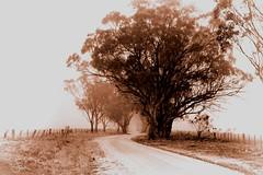 The long and winding road (jenni 101) Tags: mist fog rural processed postprocessing hss hcs nikond3300