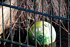 HFF || ONBEREIKBAAR || UNREACHABLE (Anne-Miek Bibbe) Tags: canonpowershotsx280hs annemiekbibbe bibbe nederland 2017 krimpenaandenijssel krimpenerwaard ijs hek fence hff bal