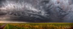 Wild Prairie (Ian McGregor Photography) Tags: canada cloud field ianmcgregor landscape nikon photography prairie regina saskatchewan cloudscape ianmcgregorphotographycom nature panorama rain storm weather