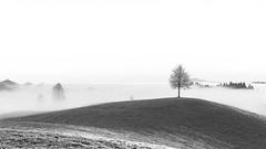 tree (schneider-lein) Tags: tree baum nebel fog misty hazy smokey frost frosty blackwhite mono monotone monochrome grau grey feld field natur nature landschaft landscape mystic mystisch mystique carlzeiss fe5518za sonyilce7rm2 alpha7rm2 a7rii normalobjektiv schönenberg schweiz switzerland suisse swiss svizzera einfach simple