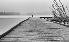 Winterwonderland-2 (nicolettefotografie) Tags: 2017winterworld winter winterworld winterday rotterdam kralingseplas blackandwhite monochrome outdoor snow ice forrest