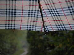 PA225942 (Lvivi) Tags: rainy regen rainiday regentag regenschirm umbrella forest wald