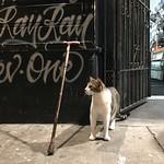 Haight Street Cool Cat thumbnail