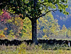 Oct30 2116 Dry Valley  Joyce pasture (wildrosetn39) Tags: oct302116dryvalley rural pasture horse autumn trees stonewall green