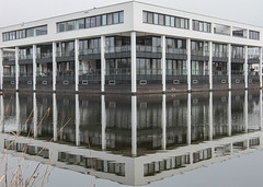 (mennomenno.) Tags: appartementen apartments reflections reflecties rotterdam riet reed