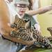 Ocelot Gamboa Wildlife Rescue pandemonio 2017 - 02