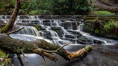 2017-01-17 Rivelin-7418.jpg (Elf Call) Tags: nikon rivelin river yorkshire water stream 18105 sheffield steppingstones waterfall d7200 blurred