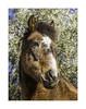 IMB_1156b Posing (foxxyg2) Tags: equine horse naxos filoti cyclades greece