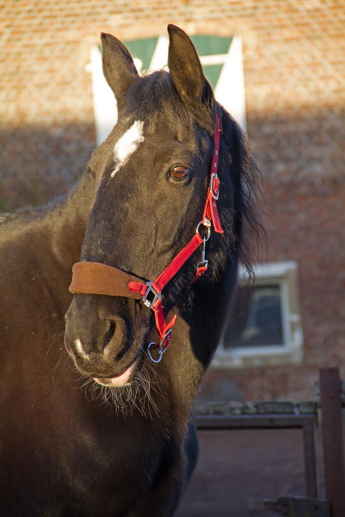 videos pferd getting inhaber homosexuell caballos