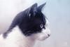 Enana (FabianJeria) Tags: cat eyes model pet garden kitty kittycat gata gatita