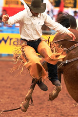 Easy Off ... (RawTsnPhoto) Tags: tucsonrodeo rodeo tucson arizona action rodeoaction prorodeo prca bronc broncrider rawtsnphoto