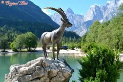 DSC_7124 (Original Loisi) Tags: panorama lake mountains alps nature landscape see view natur berge slovenia slovenija slowenien alpen gebirge steinbock kranjskagora julischealpen karawanken republikaslovenija kronau