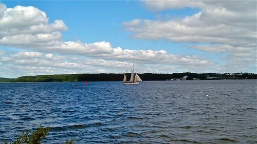 Segelschiff auf der Flensburger Förde im Hintergrund Kollund und der Kollunder Wald in Dänemark
