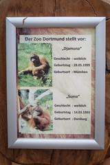 2015-07-18-09h31m50.IMG_2930 (A.J. Haverkamp) Tags: canonpowershotsx260hs dortmund nordrheinwestfalen germany orangoetan orangutan suma dob14031993 pobduisburggermany djamuna dob26051999 pobmunichgermany bord bordje zoo dierentuin httpwwwdortmunddedefreizeitundkulturzoodortmundstartzoo sign