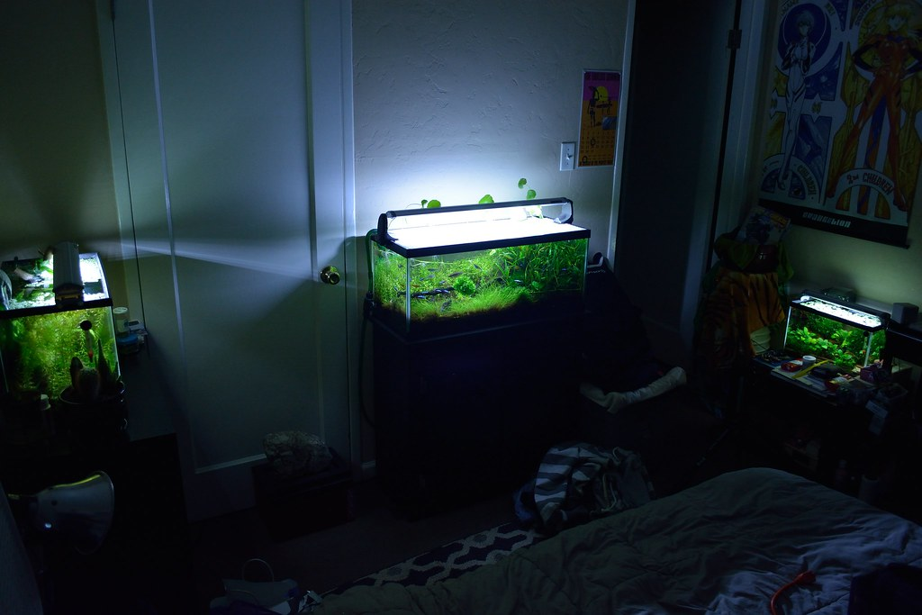 bedroom fish tank the world s best photos by dbf photo flickr hive mind 10433
