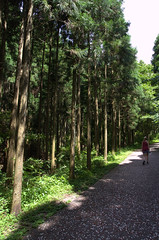 Trees Magome - Tsumago trail