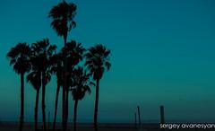 Twilight (sergey_avanesyan) Tags: california nature dark palms twilight santamonica magic palmtrees socal californian