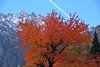 Foliage autunnale presso Bionaz (giorgiorodano46) Tags: ottobre2016 october 2016 giorgiorodano nikon autunno autumn automne herbst foliage ciliegio ciliegioselvatico cherrytree red rosso rouge valdaosta valléedaoste bionaz