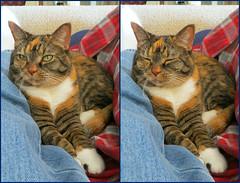 Gracie 5 December 2016 2802-2803 (edgarandron - Busy!) Tags: gracie patchedtabby cat cats kitty kitties tabby tabbies cute feline