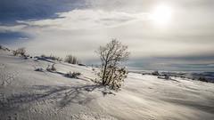Sunbathe in winter (drstar.) Tags: sunbathe winter flickr flickrturkey nikond610 snow shadows
