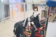 """I'm tired."" (rainwaltz) Tags: volks bjd doll super dollfie balljointeddoll williams yomidi yosd midi airport perth travel luggage bags"