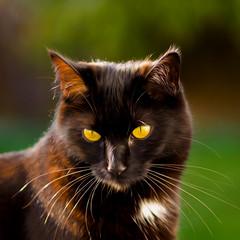 Cat magic (Karsten Gieselmann) Tags: 75mmf18 bokeh braun em5markii farbe gelb grün katzen mzuiko microfourthirds olympus schwarz simba black brown color green kgiesel m43 mft yellow burglengenfeld bayern deutschland