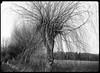 weide1 (salparadise666) Tags: voigtländer bergheil 9x12 heliar 135mm fomapan 100 sheet film caffenol rs 1239 min