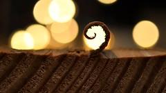 It's a Peeling Curl (Explored 23-01-17) (Aadilos) Tags: its peeling macro macromondays macromonday sigmaminiwide2 sigma bokeh curl wood light nikon d5200 itsapeeling itsapeelingtome