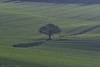 ME AND MY SHADOW.... (mark_rutley) Tags: eastmeon hampshire meonvalley lonetree thelonetree singletree