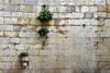 Naturalidad (Helena de Riquer) Tags: fontbaixa lesplugadefrancolí provinciadetarragona flickr 2016 textures texturas font fuente fountain barbacana concadebarberà neoclassicisme neoclasicismo carreus sillería mur paret wall outdoor plantes plantas plants stones pedres piedras topf25 helenaderiquer interestingness topf50 carlzeiss muro topf75 topf100 100faves