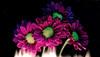 Al rojo vivo (Ste.Baz) Tags: flower dark macro flame mystery redhot alrojovivo amour love fire ice feu glace