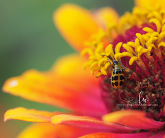 A Bug's Life (Heather Annee Photography) Tags: bug flowers closeup macro vividcolors summer blooms mft olympus mirrorlesscamera indiana photographer flowerwhispererphotography flowerphotographer nature colors dof naturallight olympusem5