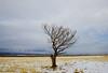 Half the Tree It Used to Be (JasonCameron) Tags: mountain desert utah high alone lone tree half dead field