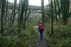 Bolintxu jungle (Paulo Etxeberria) Tags: bolintxu bilbao basoa bosque forest forêt bidea camino path chemin mendizalea montañera hiker promeneur