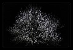 tree in the night (willy.sybesma) Tags: willysybesmafotografie wit vrij werk