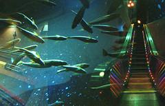 a dream diary (m_travels) Tags: underground underworld multiple doubleexposure filmphotography analog escalator blue aquatic underwater art surreal strange night experimental fish sooc noedit crazystuff lomography800color 35mmfilm dream