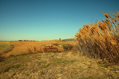 vecchio attrezzo. (Enzo Ghignoni) Tags: attrezzo agricolo cielo terra canne colori piante erba toscana italia