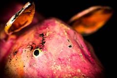 piggie (mwu73) Tags: makro alt rosa macro old metall pink 2017 pig ear ohr eye schwein auge metal
