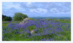 """Bluebells on the hill. (""""KatyCollins""""2504) Tags: sky bluebells hills bushes"""