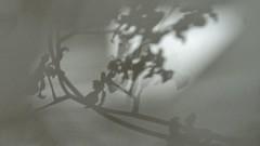 sombras 004 (Parchen) Tags: muro textura luz branco wall sombra preto cor sombras texturas parede nuances monocromtico suavidade transio parchen carlosparchen