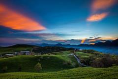 _MG_8423 () Tags: morning sunset sky sun lake night clouds sunrise photography dawn farm taiwan bluesky farmland daylily  choi dslr      baiyun   noctilucent         invertedimage formosan   hemerocallisfulva     lilyflower             canon5d2