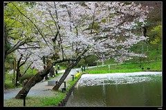nEO_IMG_DP1U3783 (c0466art) Tags: park old trip travel flowers light green castle pool beautiful japan canon season spring scenery afternoon bloom sakura 2015 trres 1dx c0466art
