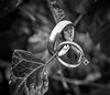Wedding Rings (johnnewstead1) Tags: wedding weddingphotographer weddingphotography weddingday weddingrings norfolkwedding norfolkweddingphotographer johnnewstead simonwatson simonwatsonphography blackwhite blackandwhite monochrome olympus em1 mzuiko ring rings