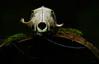 Fund im dunklen Wald (Lutz Koch) Tags: skellett schädel tier animal skull wald forest dark dunkel elkaypics lutzkoch alptraum nightmare knochen bones idsteinerland traum dream skeleton kadaver cadaver carcass fund found