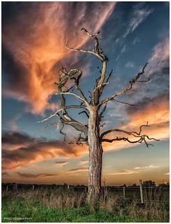 Sunset of a dead tree {Explore}