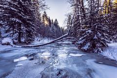 Winter morning (kubaszymik) Tags: morning ice cold river brooke snow sun forest frozen freeze iceberg canon poland vsco beskidy sopotnia trees sunrise dawn colors white blue